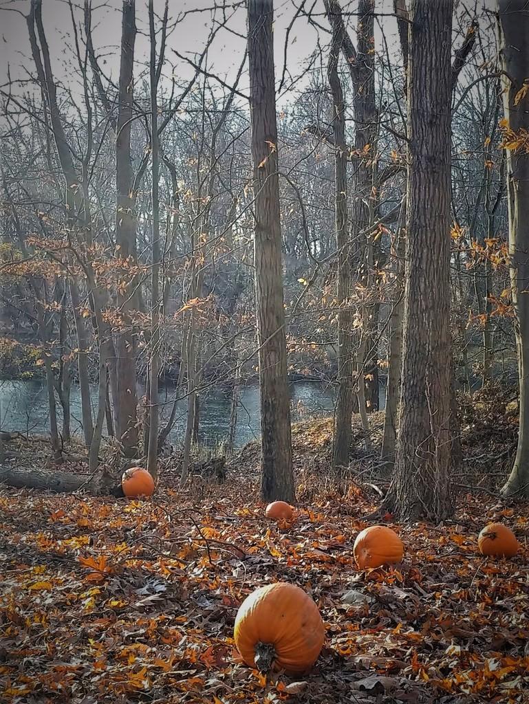 Re-Purposed Pumpkins by jo38
