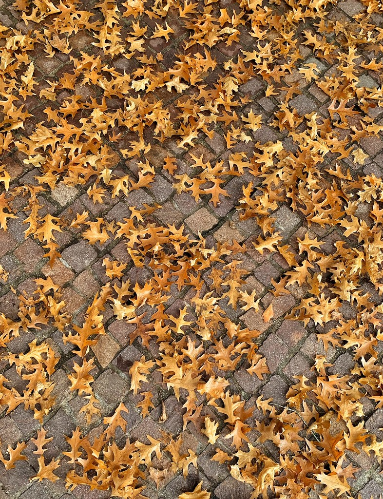 Brown leaves.  by cocobella