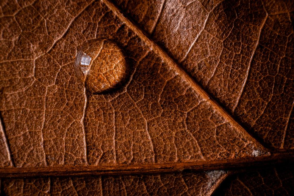 oak by jackies365