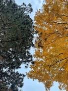 16th Nov 2020 - Seasons.