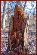 14th Nov 2020 - Wood Tone & Texture