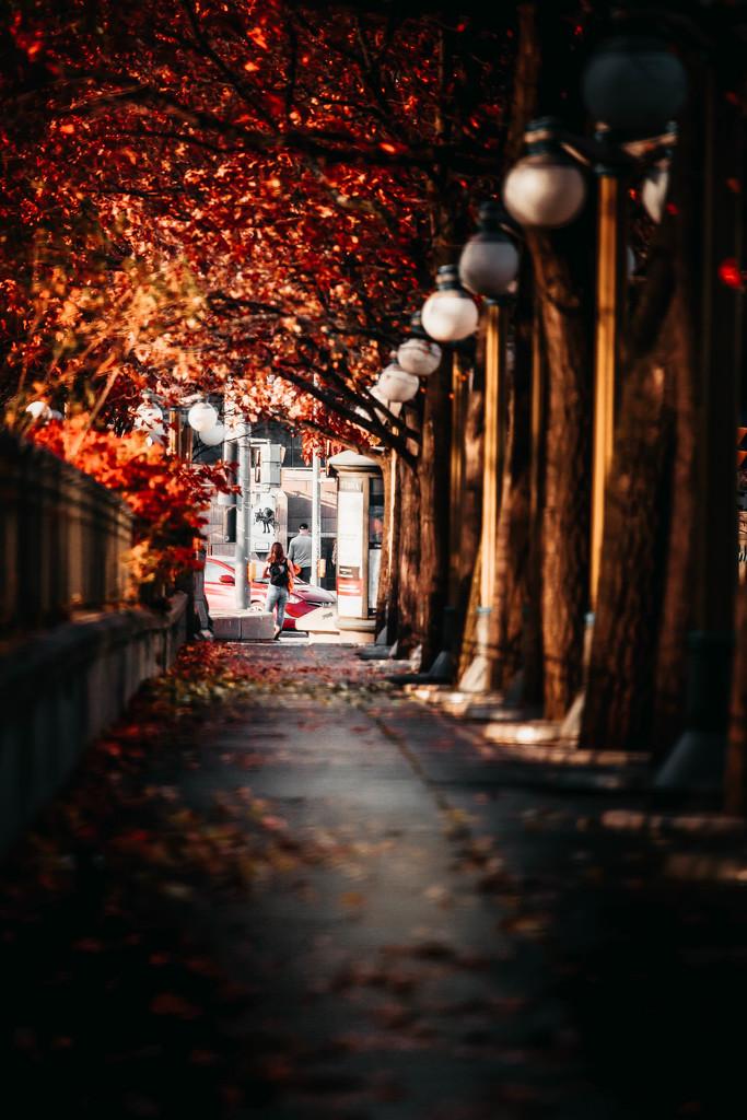last of fall by adi314
