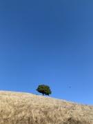 14th Nov 2020 - 1 tree 1 bird
