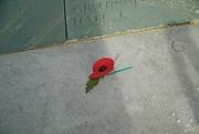 15th Nov 2020 - Fleet Air Arm Memorial 1939-1945