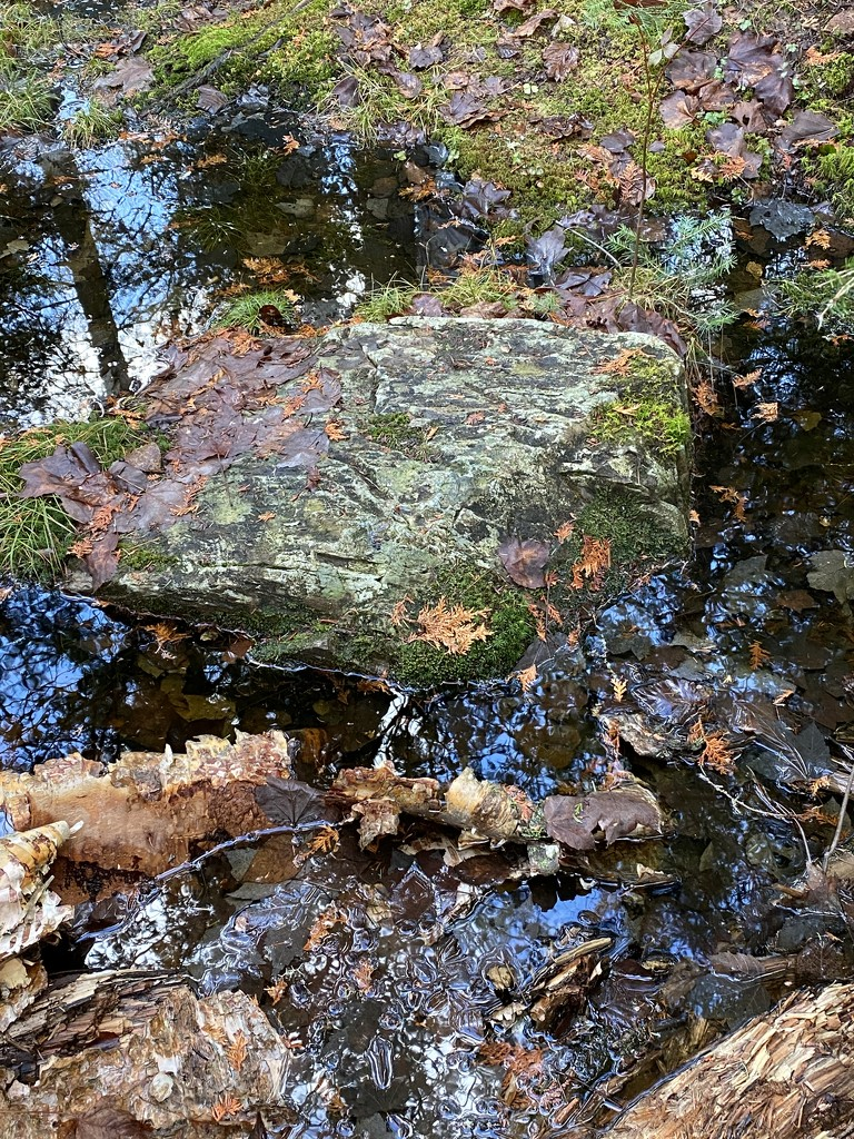Moss Covered Rocks  by radiogirl