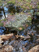15th Nov 2020 - Moss Covered Rocks