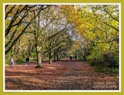 15th Nov 2020 - Woodland Walk