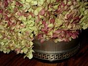 15th Nov 2020 - still life - pretty dried hydrangea blossoms