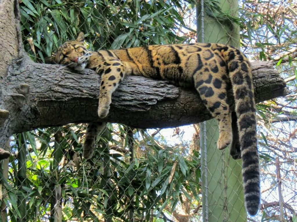 Sleepy Kitty by moviegal1