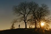 15th Nov 2020 - 2020-11-15 the walnut trees