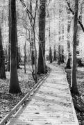 15th Nov 2020 - Congaree National Park Walkway