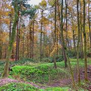 15th Nov 2020 - The woods again