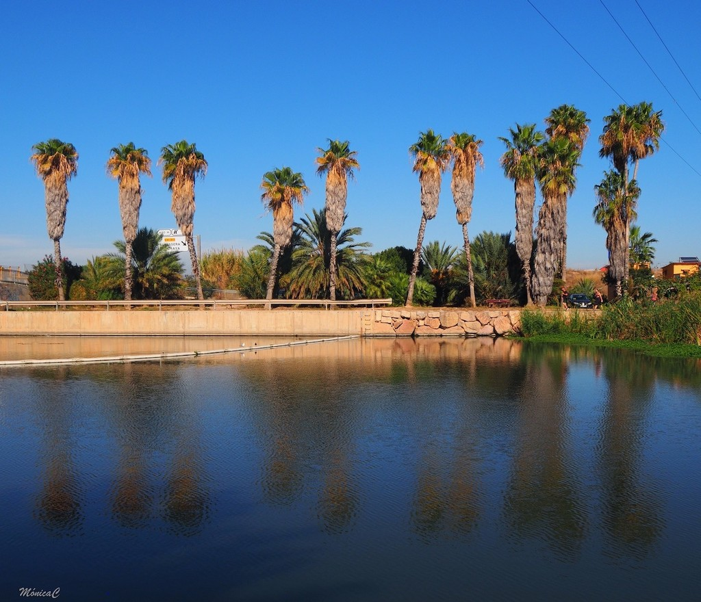 Palm trees by monicac