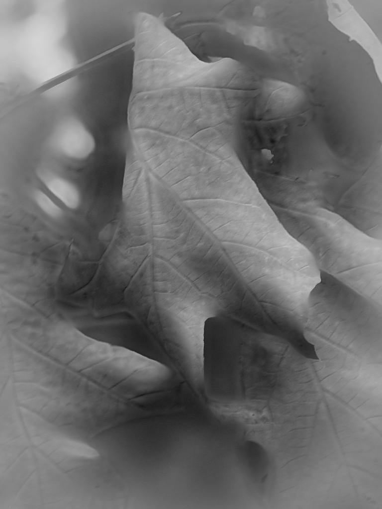Shades of Gray - The Monkees by marlboromaam