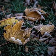 15th Nov 2020 - Frosty Edging