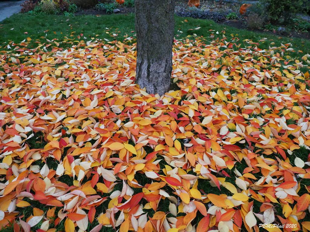 Blanket of Leaves by selkie