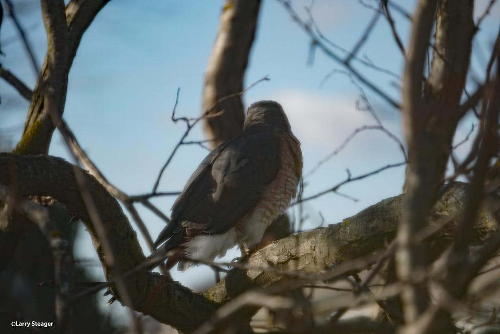 Sunday afternoon visitor by larrysphotos