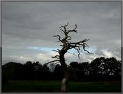 16th Nov 2020 - dead tree