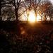 Evening glory by janturnbull