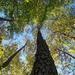 Under a tall pine... by marlboromaam