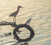 6th Nov 2020 - Fishing at low tide.