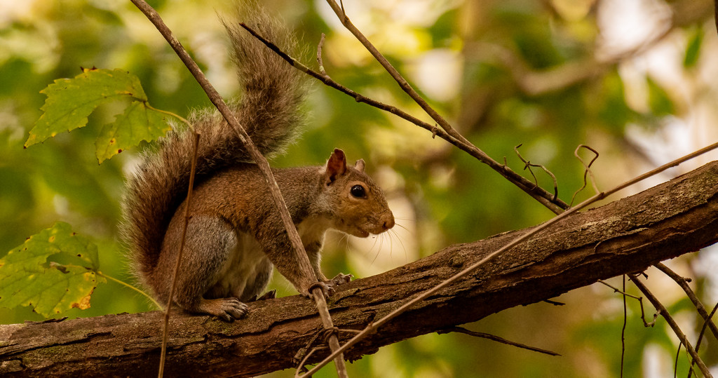 Mr Squirrel Was Barking Up a Storm! by rickster549
