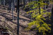 15th Nov 2020 - Ravine in Fall