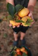 15th Nov 2020 - Harvesting