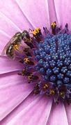 4th Nov 2020 - Australian Stingless Bees