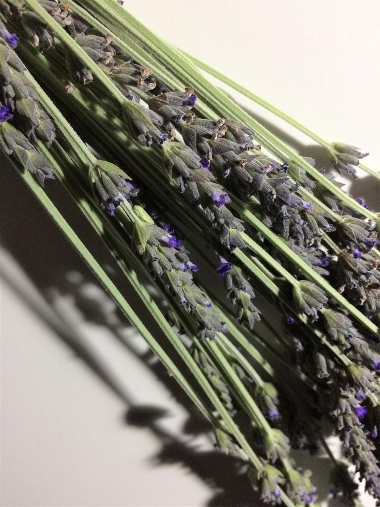 Lavender by lmsa