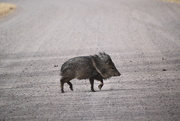 16th Nov 2020 - This Little Piggy Went Wee Wee Wee all The Way Home.