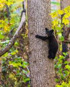 16th Nov 2020 - Black Bear Cub in the Smokies
