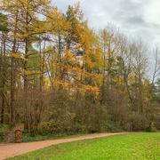16th Nov 2020 - The woods again