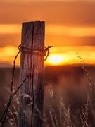 14th Nov 2020 - sunset post