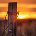 sunset post