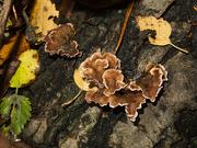 16th Nov 2020 - Fungi