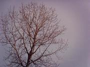 16th Nov 2020 - T For Tree