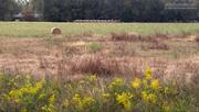 16th Nov 2020 - Painted field...