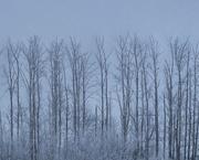 16th Nov 2020 - Frost Fog