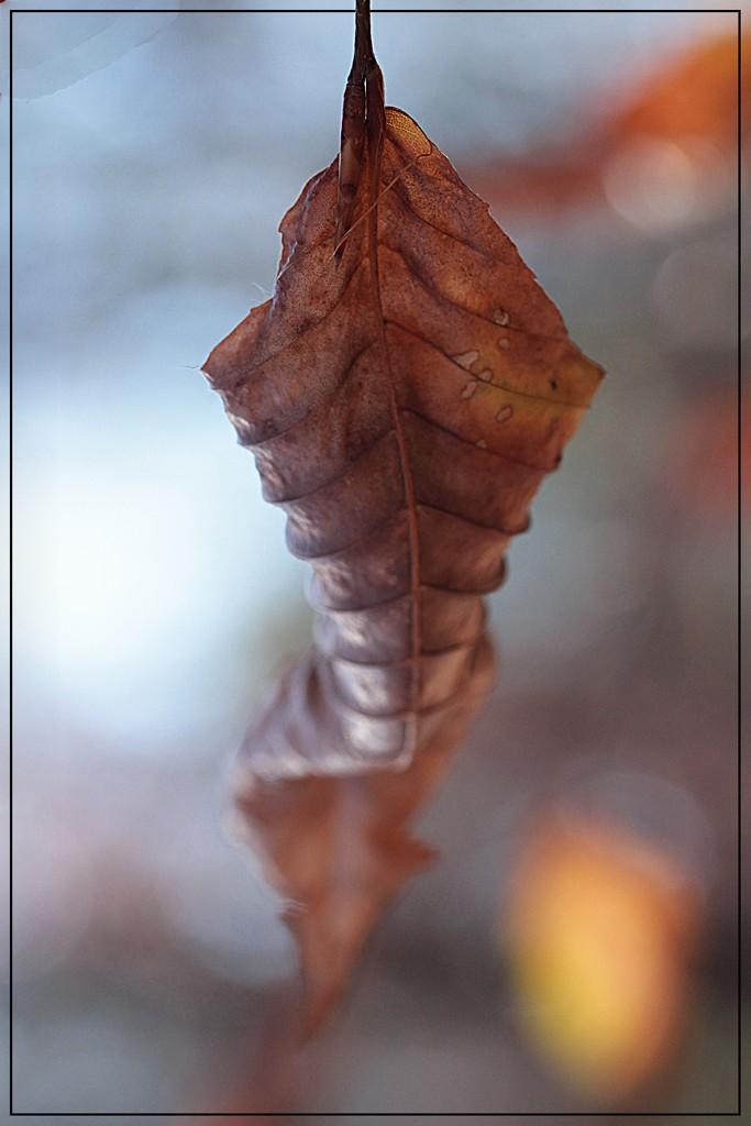 Autumn's Ornament by olivetreeann
