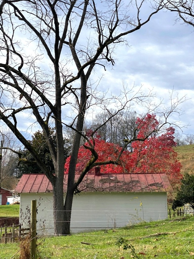 Red Tree and Red Roof by calm