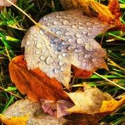 16th Nov 2020 - Lose Their Leaves