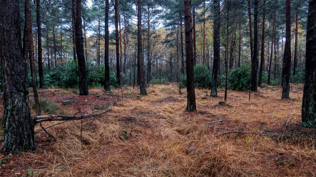 Day 14 - The Woods by backspin71