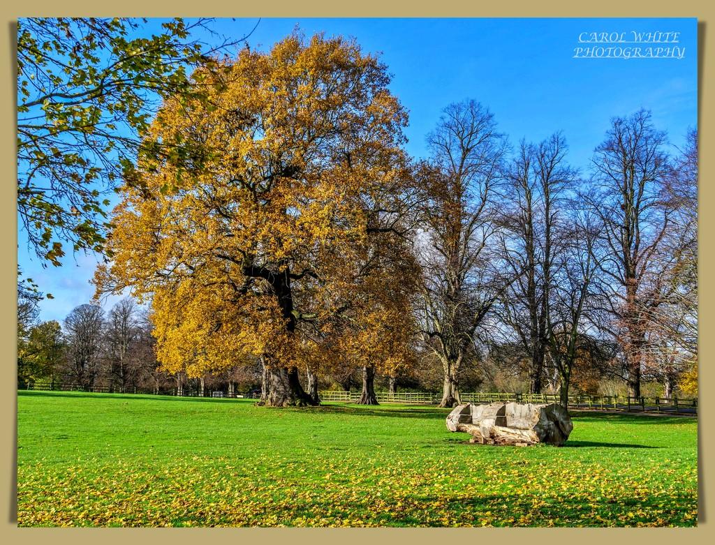 Delapre Abbey Park by carolmw
