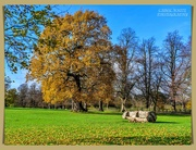 17th Nov 2020 - Delapre Abbey Park