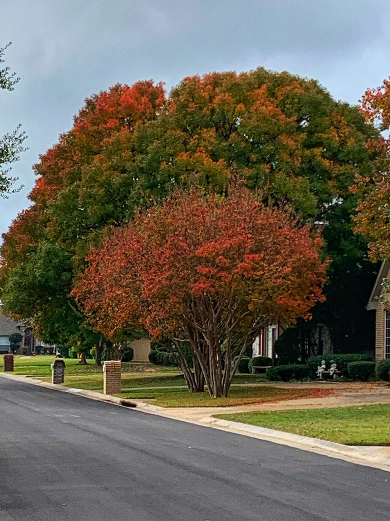Some fall color in my neighborhood  by louannwarren