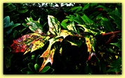 18th Nov 2020 - The shades of Autumn  ....