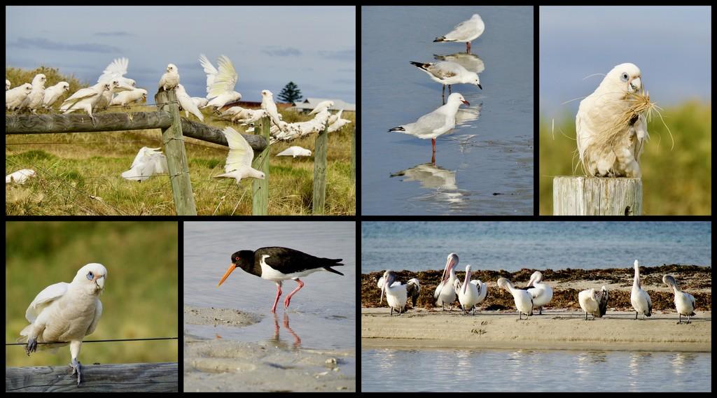 The Birds Were Enjoying The Beach Too by merrelyn