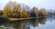 17th Nov 2020 - Beside Rawcliffe Lake