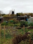16th Nov 2020 - From the Allotments